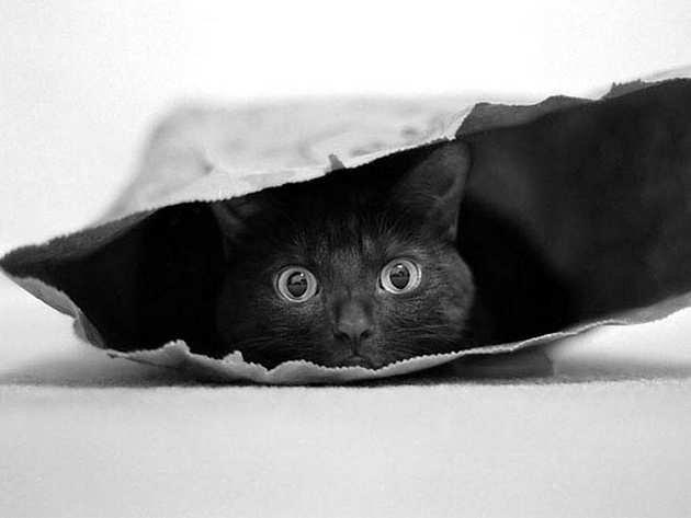 Cat in a bag © Jeremy