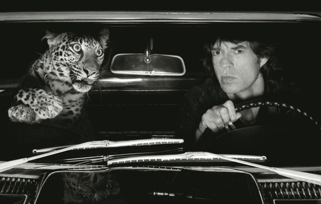 © Albert Watson Mick Jagger in Car with Leopard, Los Angeles, 1992