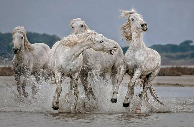 Move Over....... ©  Paul Keates