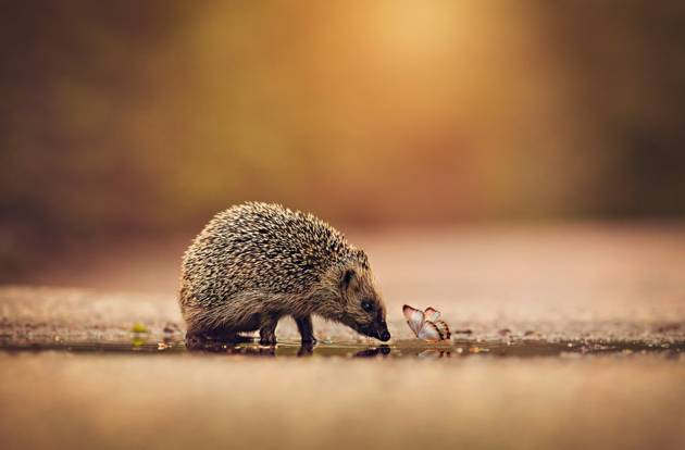 Small Friends © Anna Karin Pаlsson