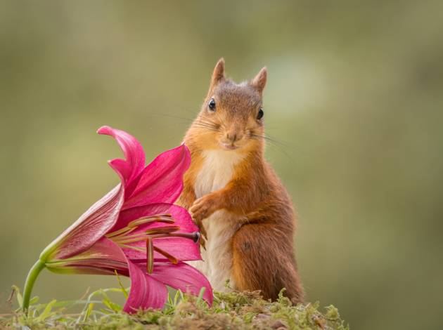 Flower friend © Geert Weggen