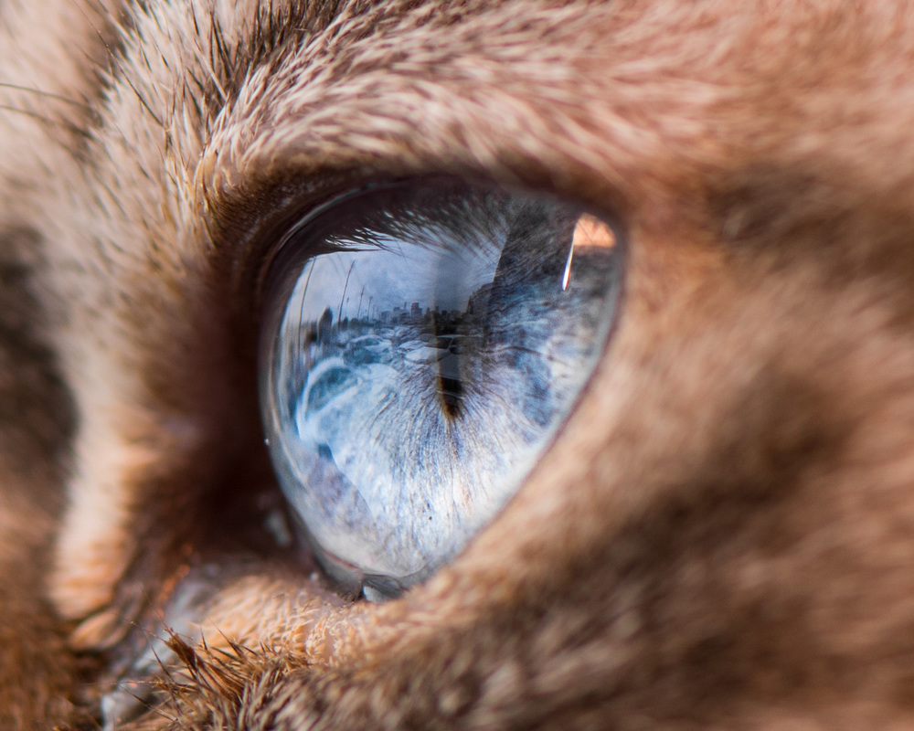 discuss why animal eyes glow green How to fix animal red-eye or green-eye on iphoto you can quickly and easily remove red glow from images of both humans and animals with only a few clicks 1.