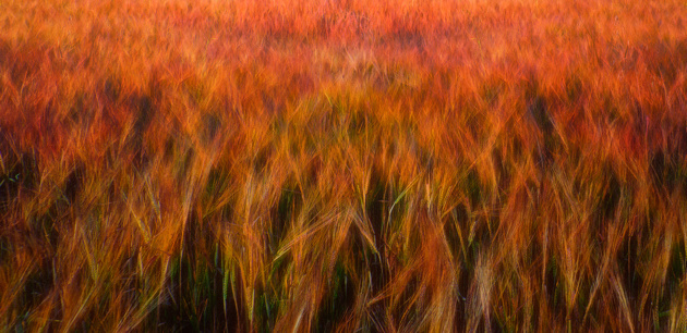 Fire fields © Piotr Krol Bax