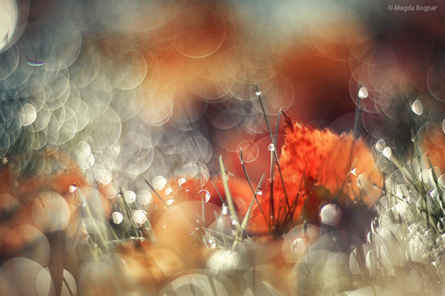 Morning Dew © Magda Bognar