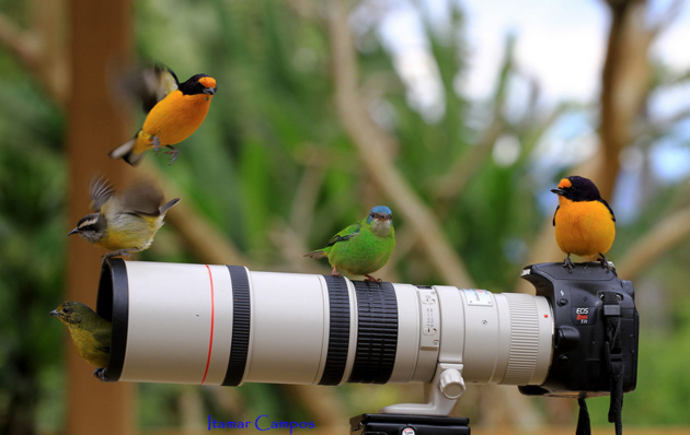 Resting in a good Perch © Itamar Campos