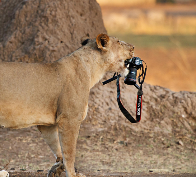Do you mind if I borrow this camera © Ed Hetherington
