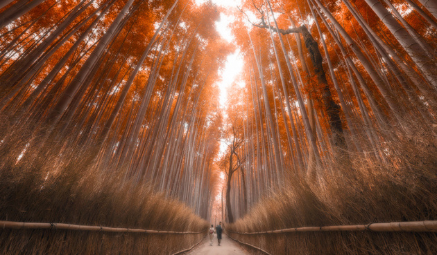 Kyoto Bamboo Forest © Jimmy Mcintyre