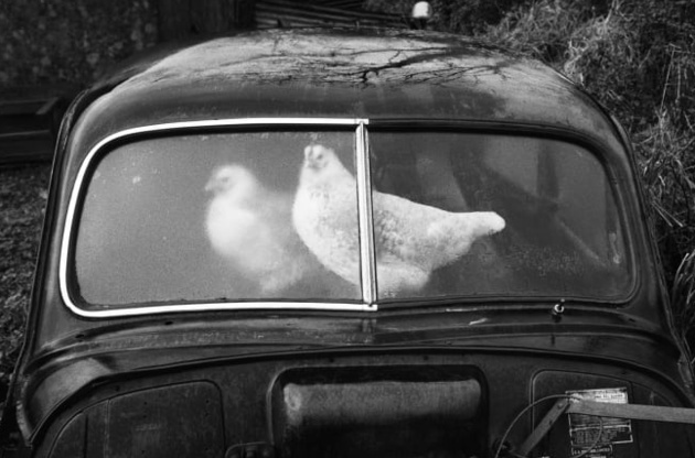 © Martin Parr / Magnum Photos / Rocket Gallery Glencar, County Sligo, Ireland. Abandoned Morris Minors, from 'A Fair Day', 1980-1983.