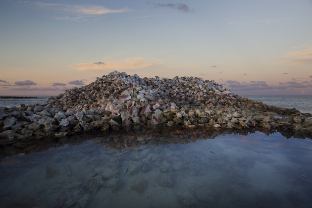 Anne de Carbuccia – Conch shells fighting erosion