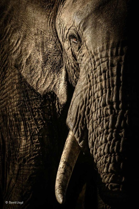 Фото: David Lloyd / Wildlife Photographer of the Year