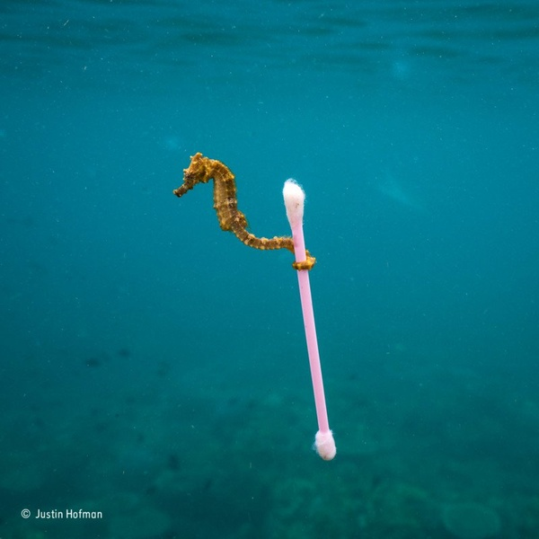 Фото: Justin Hofman / Wildlife Photographer of the Year