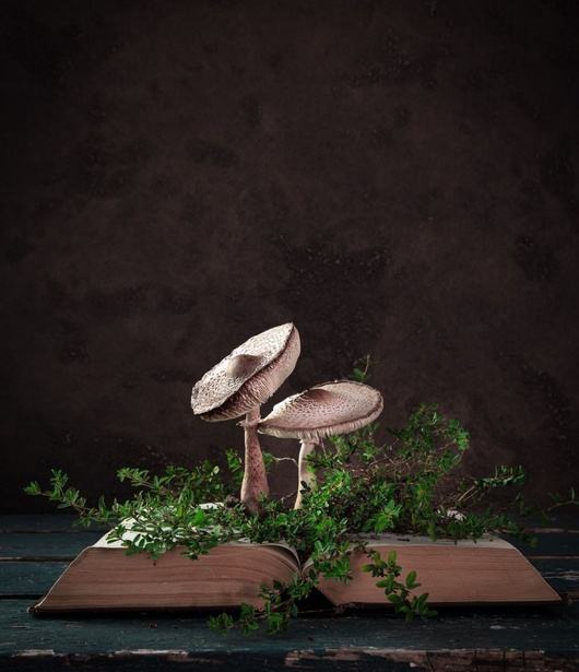 © Elena Strokina, Russian Federation, Shortlist, Professional competition, Still Life, 2020 Sony World Photography Awards