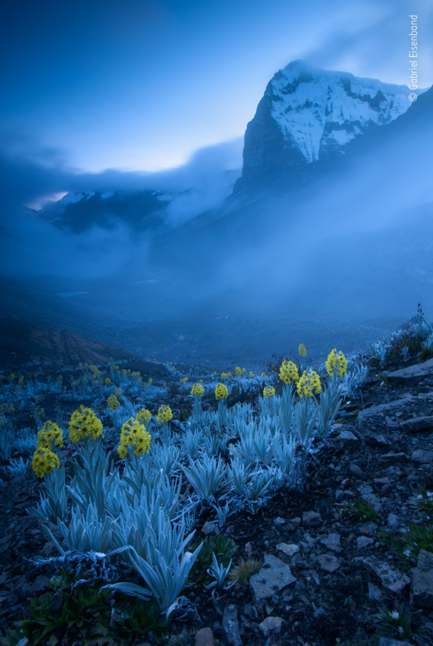 Out of the blue by Gabriel Eisenband, Colombia Winner 2020, Plants and Fungi