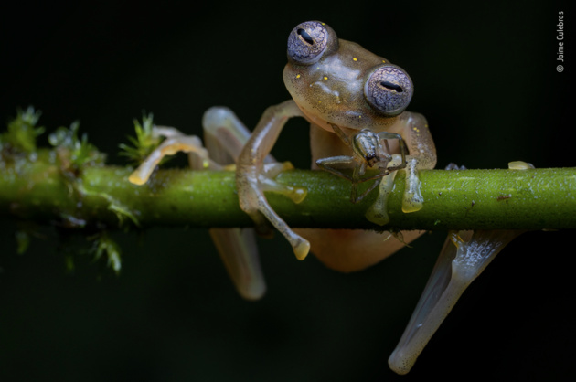 Life in the balance by Jaime Culebras, Spain Winner 2020, Behaviour: Amphibians and Reptiles